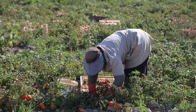 افزایش چند برابری بذر و کود